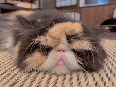 KOSAME(コサメ) 猫の日