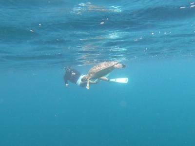 KONOSUKE(コウノスケ) ウミガメ