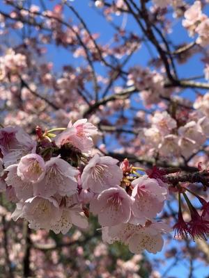 AKAGI(アカギ) 春