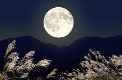 AO(アオ) お月見
