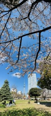 RYOGA(リョウガ) 東京は満開