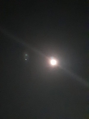 MIKIO(ミキオ) 中秋の名月