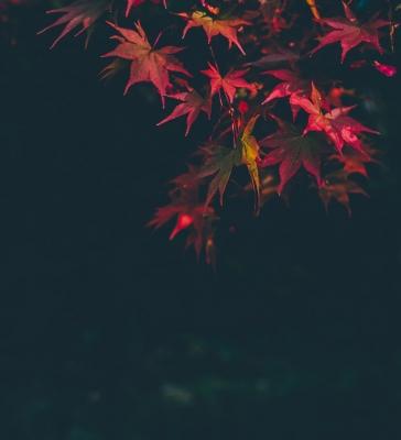 KISARAGI(キサラギ) 紅に咲く