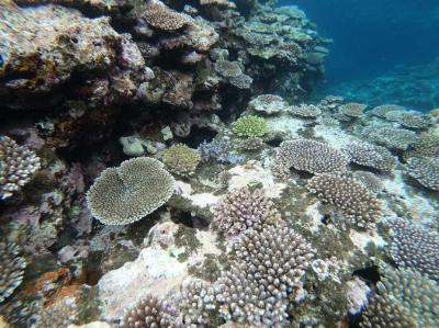 KONOSUKE(コウノスケ) 珊瑚きれかったよ