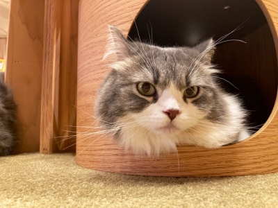 OTOHA(オトハ) 猫カフェ行ってきたよ〜