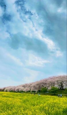 RYOGA(リョウガ) 桜納