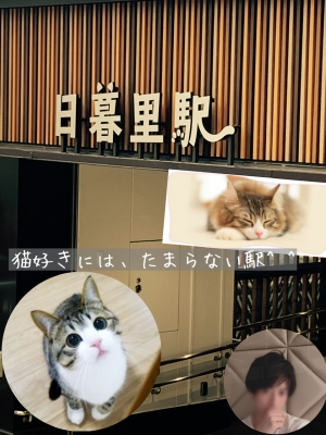 DAICHI(ダイチ) ねこ駅^ ^