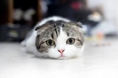 RYOGA(リョウガ) 猫様からのご指名