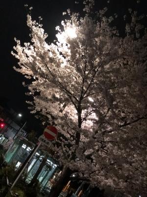 TOMOAKI(トモアキ) 春
