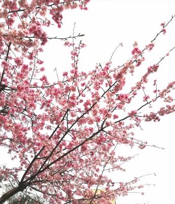 KAORU (カオル) 春