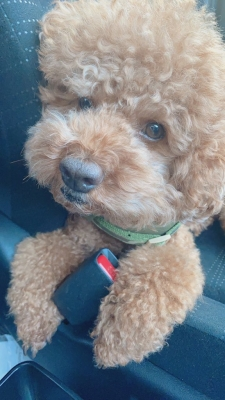 SYOKICHI(ショウキチ) 愛犬君とまたまたドライブ