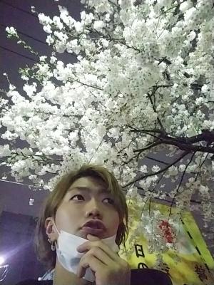 RYOSUKE(リョースケ) 夜桜ー