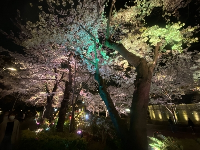 MASARU(マサル) 桜舞い散る