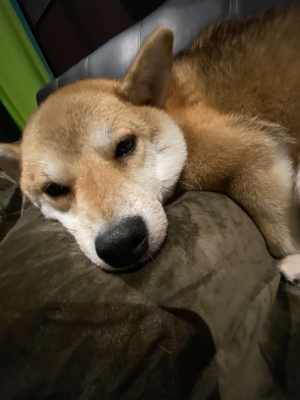 AKANE(アカネ) お眠なのね(*^-^*)