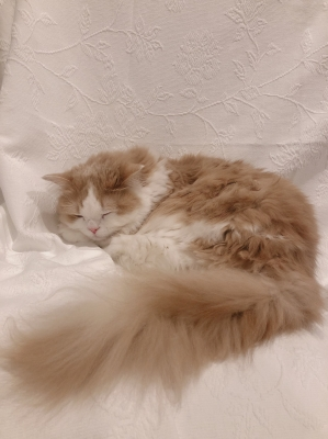 MOMO(モモ) うちの猫が可愛すぎる!!(実家)