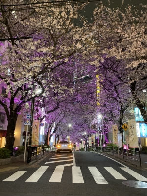 CHATARO(チャタロウ) 夜桜