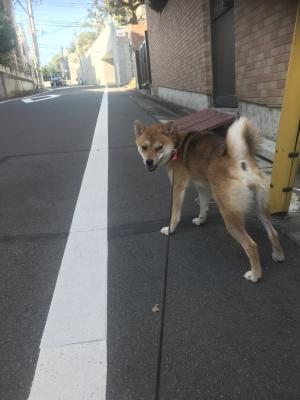 HIROAKI(ヒロアキ) 連続投稿すいません。