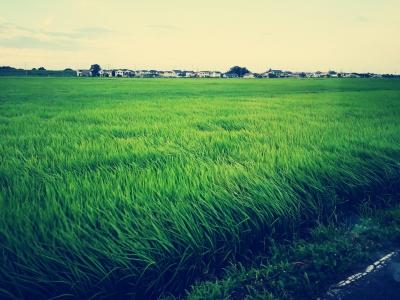 SOU(ソウ) 緑色の絨毯