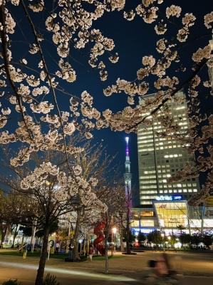 RYOGA(リョウガ) 夜桜も最高ですね